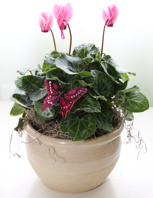 More Potted Plants for Spring! | Sweet Pea Floral, LLC